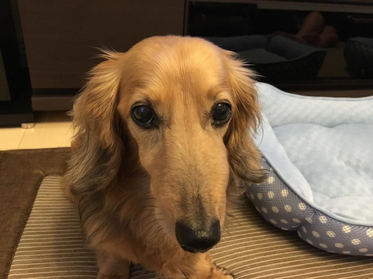 が 犬 の 腫れる 顔